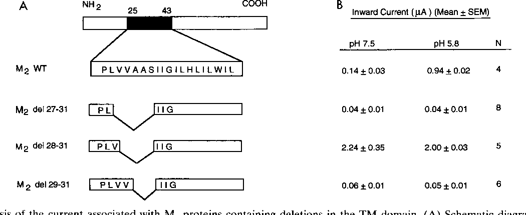 Figure 7 From R A Lamb Structure Function Analysis Influenza A