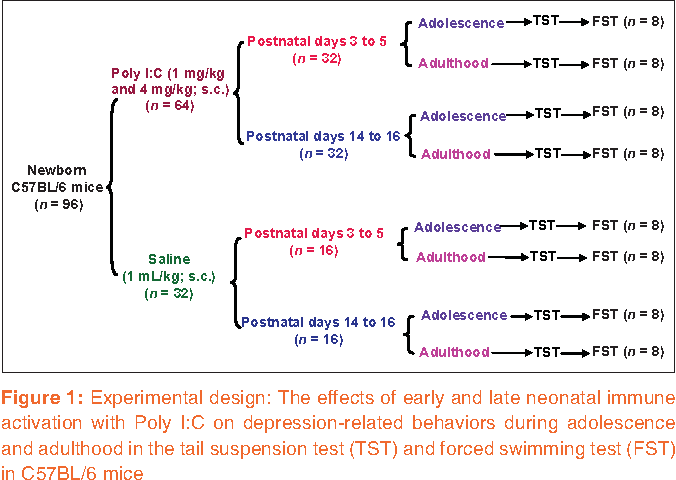 Brain Development Influenced By Immune >> Pdf Neonatal Immune Activation During Early And Late Postnatal