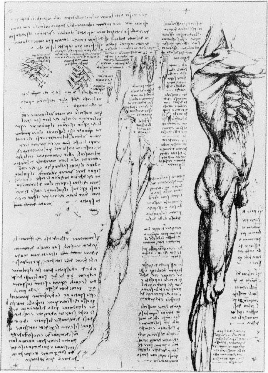 Excelente Uc Berkeley Anatomía Friso - Fisiologia del Cuerpo Humano ...