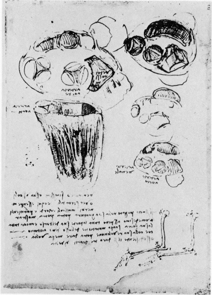 Hermosa Uc Berkeley Anatomía Modelo - Imágenes de Anatomía Humana ...