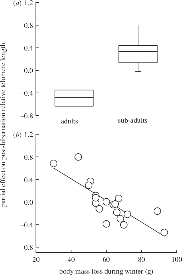 Figure 2 from Seasonal variation in telomere length of a