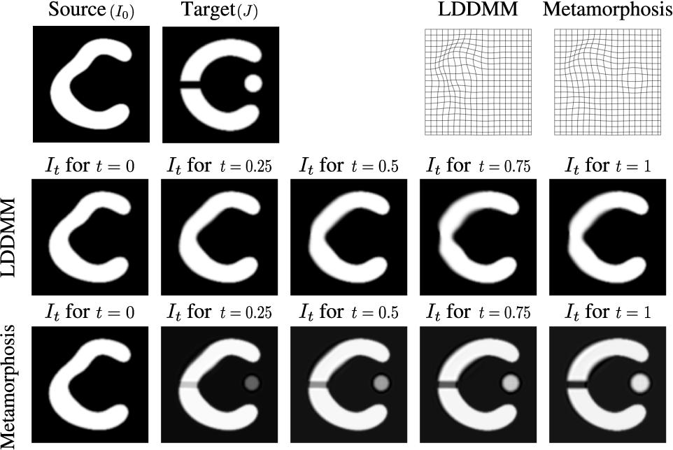 Figure 2 for Metamorphic image registration using a semi-Lagrangian scheme