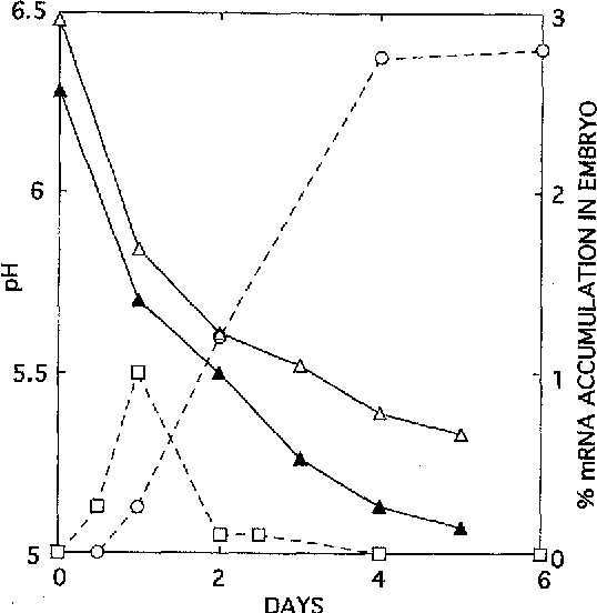 Fig. 2 Acidification of germinated rice seed superimposed on AmylA and Amy3D gene expression. • Embryoless half seed pH, ~ embryo pH, [] embryo Amy3D mRNA, o embryo AmylA mRNA. Gene expression data were taken from (Karrer et al. (1991). Seeds were moistened and harvested for analysis after 0-6 days