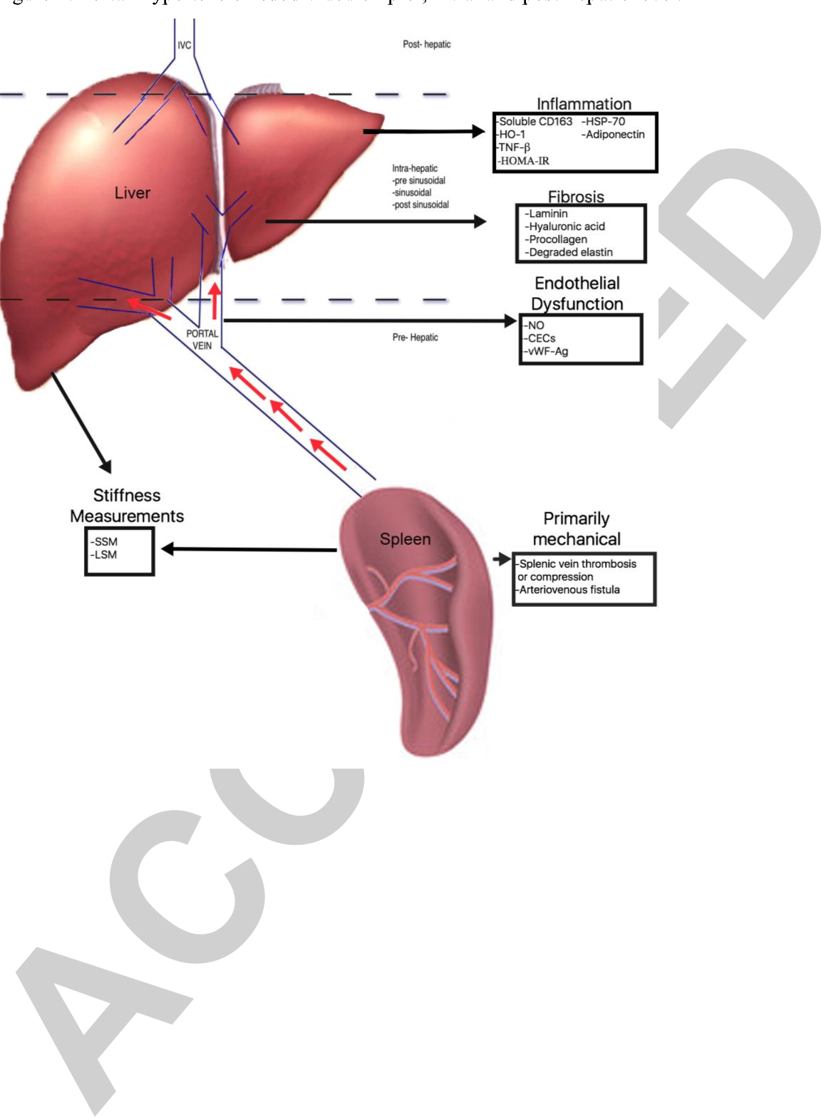 Non-invasive Markers of Portal Hypertension: Appraisal of