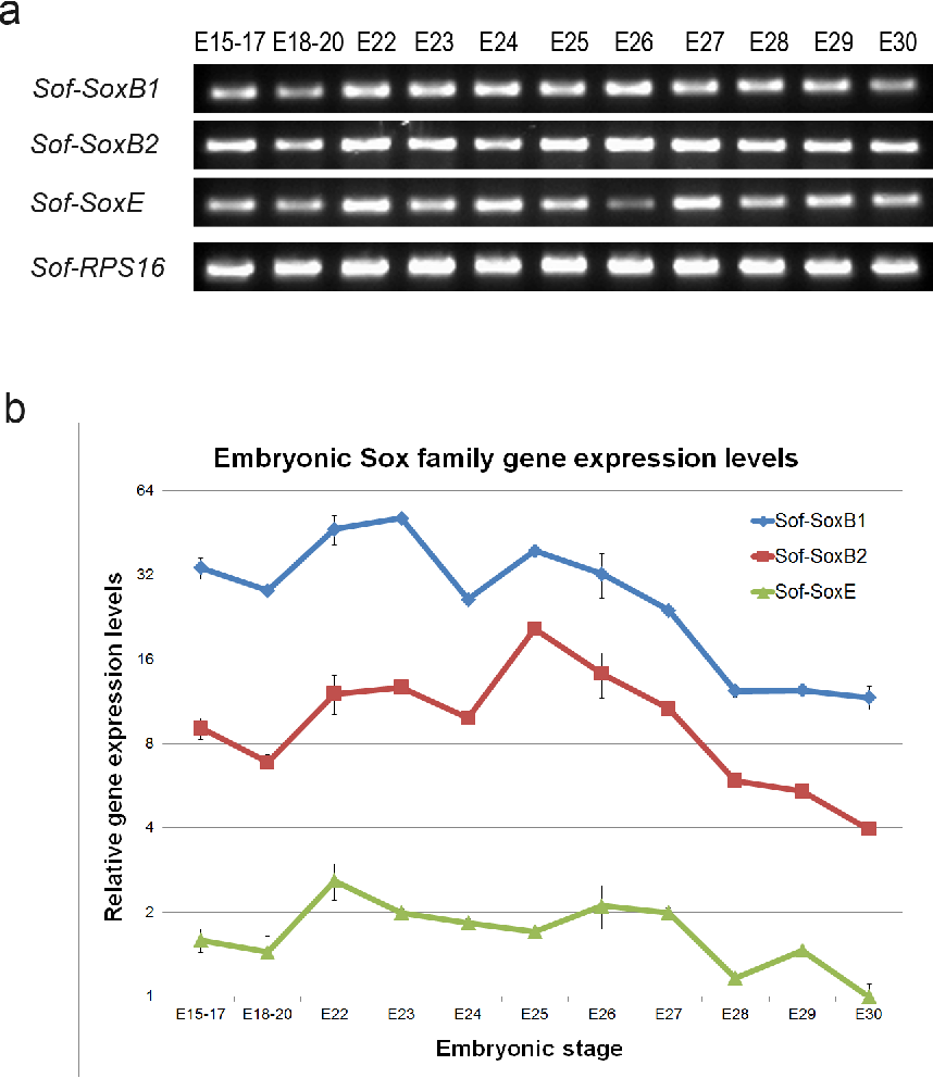 Analyses of sox b and sox e family genes in the cephalopod sepia figure 3 ccuart Images
