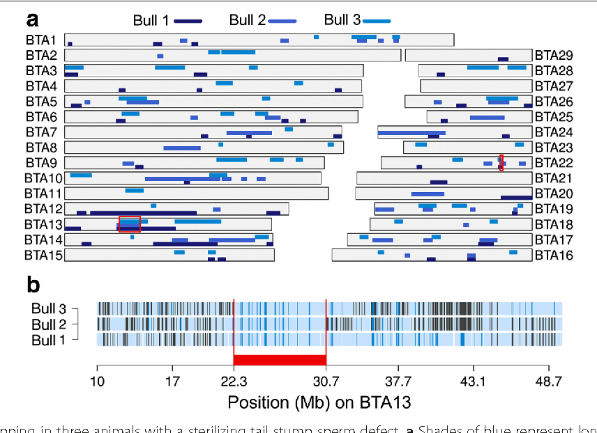 A frameshift mutation in ARMC3 is associated with a tail stump sperm ...