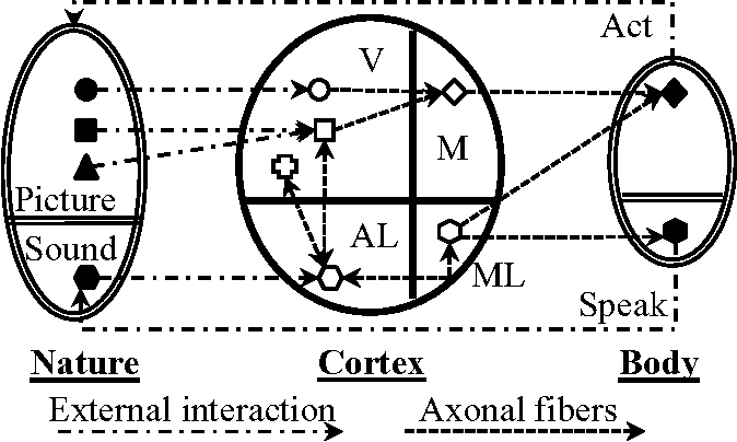 Figure 3 for Neural Mechanism of Language