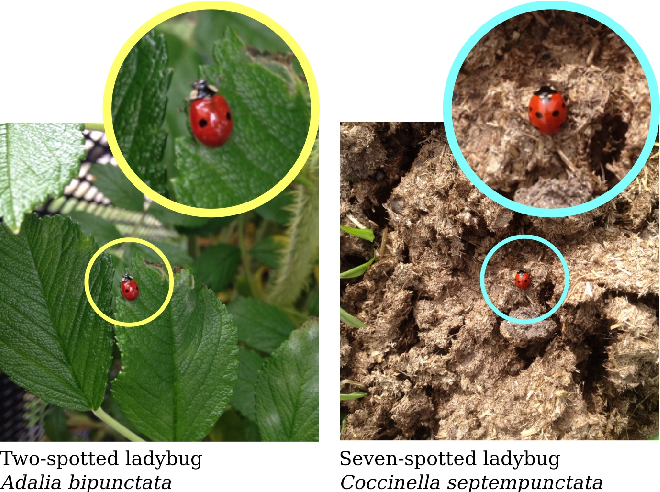 Figure 1 for The iNaturalist Species Classification and Detection Dataset