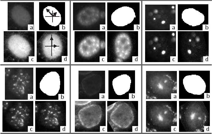 Figure 3 for HEp-2 Cell Image Classification with Deep Convolutional Neural Networks