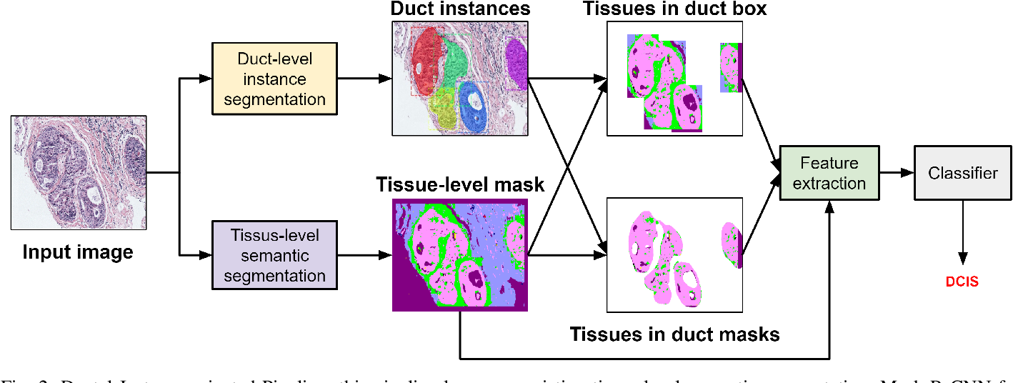 Figure 2 for Classifying Breast Histopathology Images with a Ductal Instance-Oriented Pipeline