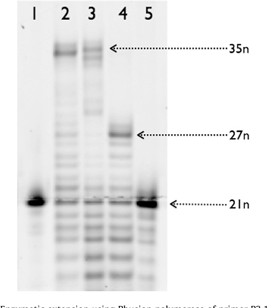 Figure 3 from Enzymatic polymerisation involving 2\'-amino-LNA ...