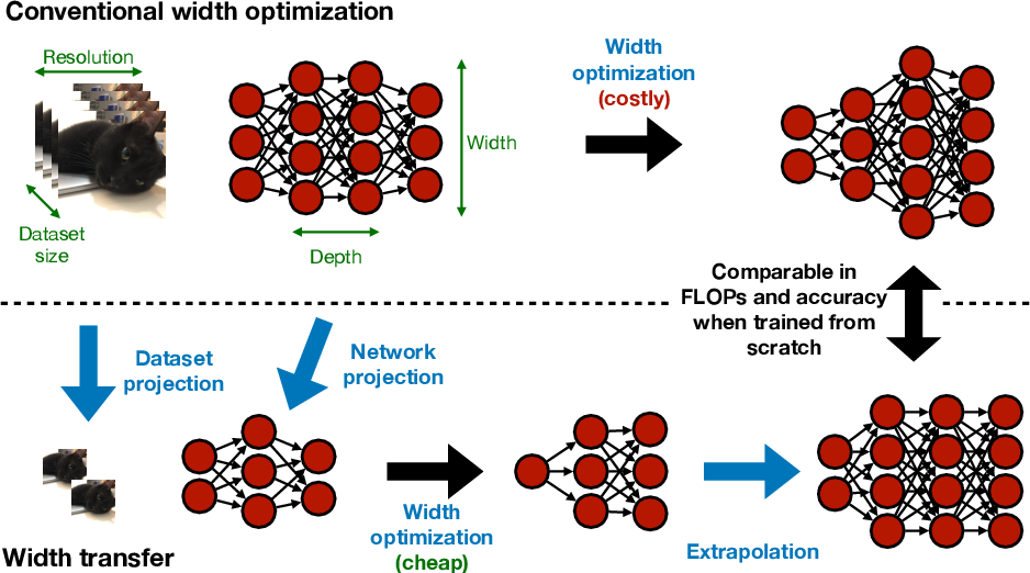 Figure 1 for Width Transfer: On the (In)variance of Width Optimization