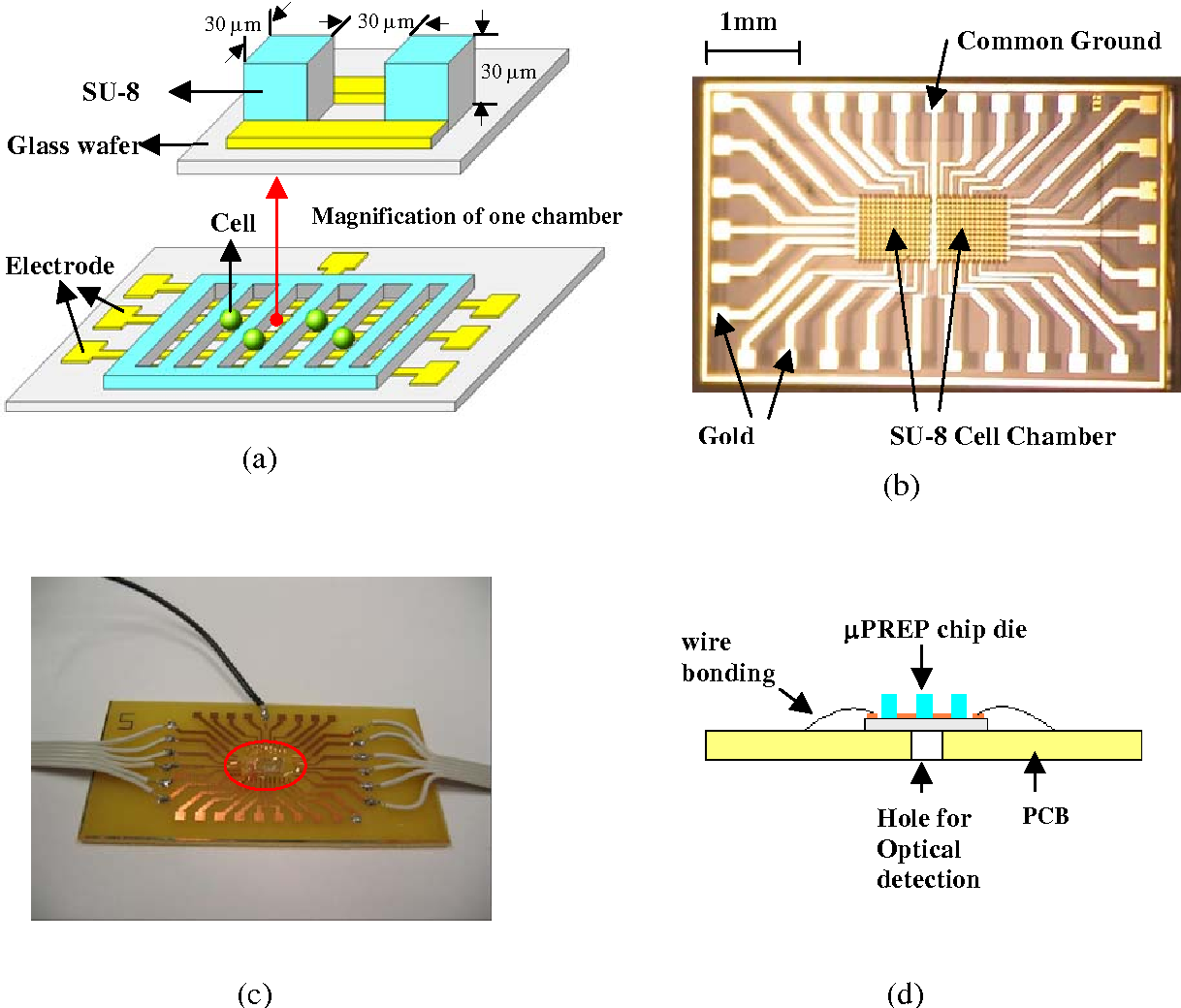 Figure 1 From Micro Pulsed Radio Frequency Electroporation Chips Gold Detector Schematic Diagram A 3d And Cross Section Of The Prep