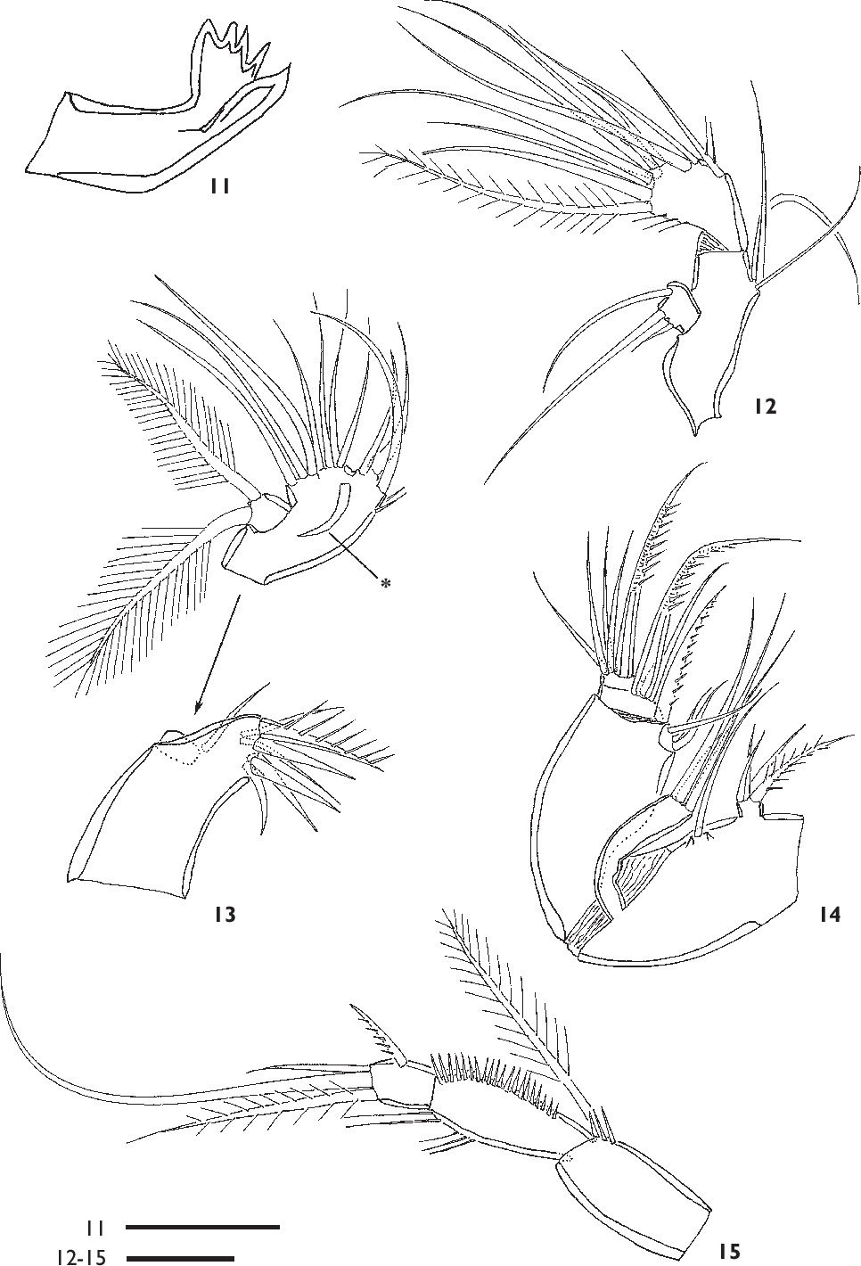 Figure 11-15 from A new genus of Ectinosomatidae (Copepoda