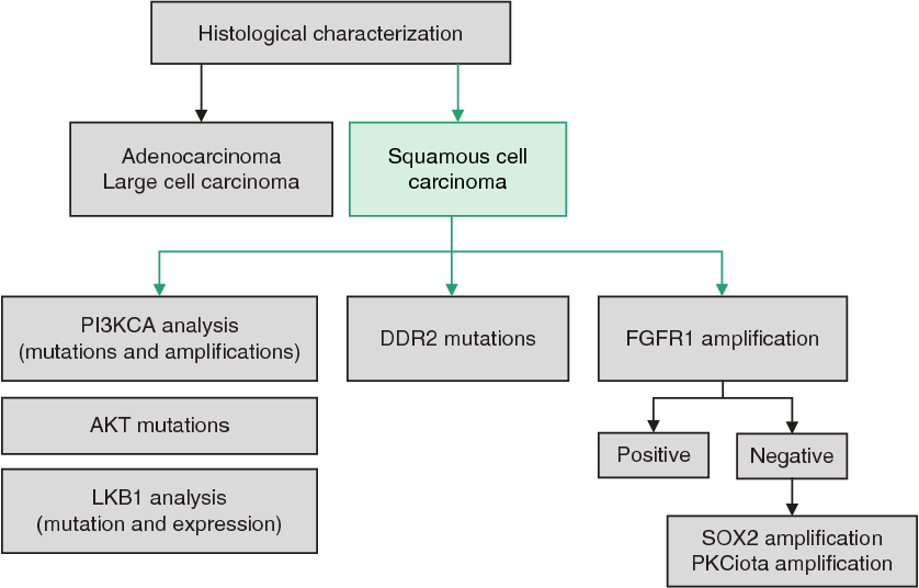 Figure 3 from Role of Genotyping in Non-Small Cell Lung