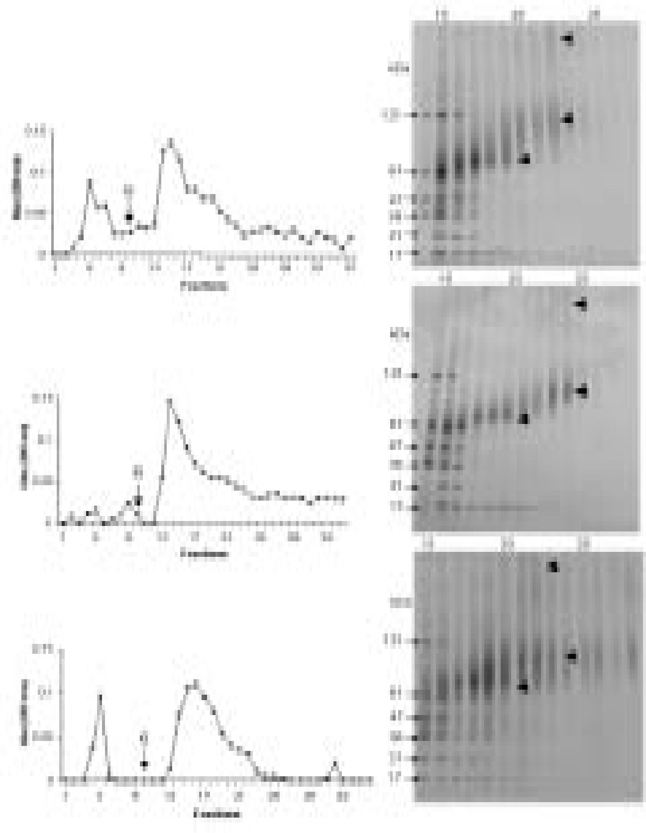 FIGURE 3. DEAE-Sephacel chromatography (A,C,E) and SDS-PAGE (B,D,F) of PL, PM and DC extracts. The proteins were eluted with a gradient (0.1-1.0 M) of NaCl. G - start of the gradient. The gels show proteins with molecular masses 121, 61, 47, 36, 21 and 17 kDa. Polydisperse bands were also seen at 67, 80-100 and 250-300 kDa (<). s