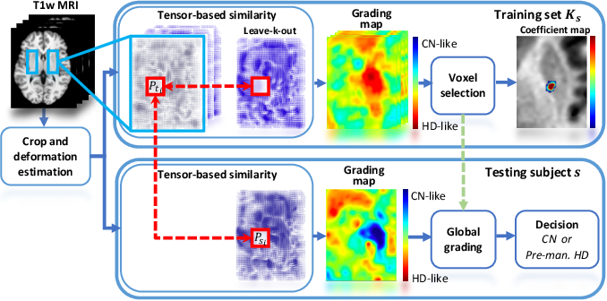 Figure 1 for Tensor-Based Grading: A Novel Patch-Based Grading Approach for the Analysis of Deformation Fields in Huntington's Disease