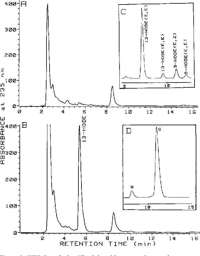 Figure 2. HPLC analysis of linoleic acid oxygenation products formed by peripheral monocyte-derived macrophages prepared from normal and transgenic rabbits. (A) Reverse phase–HPLC of products formed by monocyte-derived macrophages of nontransgenic rabbits. (B) Reverse phase–HPLC of products formed by monocyte-derived macrophages of nontransgenic rabbits; note the appearance of the 13- HODE peak absent in A. (C) Straight phase–HPLC of products formed by monocyte-derived macrophages of transgenic rabbits. (D) Chiral phase–HPLC of products formed by monocyte-derived macrophages of transgenic rabbits.
