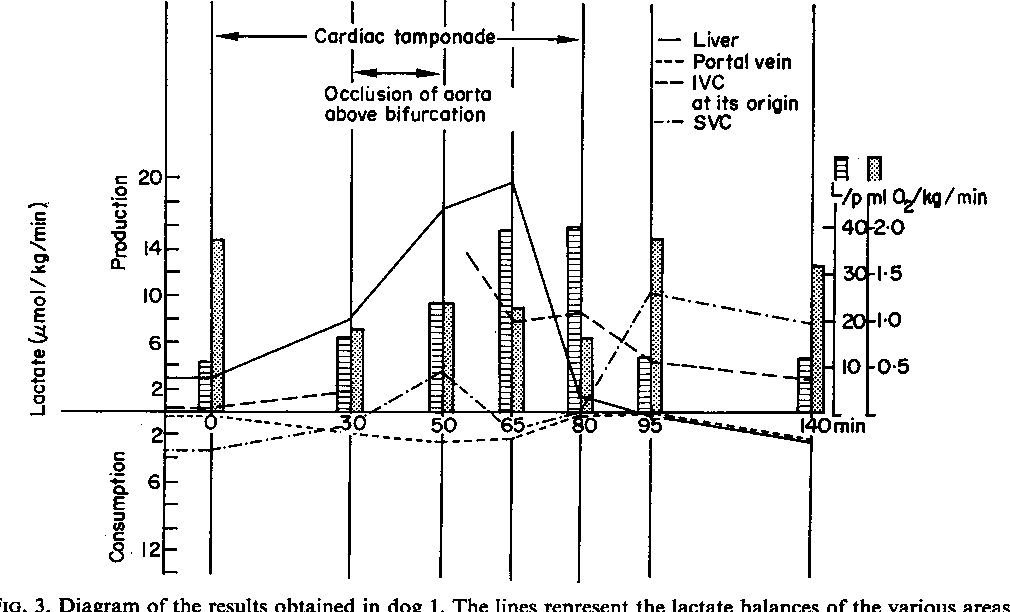 Figure 3 From The Role Of The Liver In The Development Of Lactic