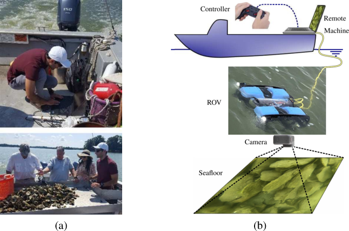 Figure 3 for Detecting and Counting Oysters