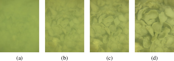 Figure 4 for Detecting and Counting Oysters