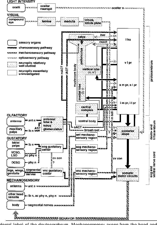 Evolution, discovery, and interpretations of arthropod mushroom ...