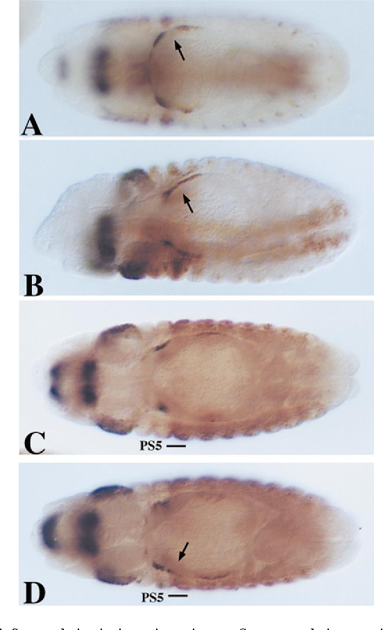Figure 7 from Homeotic Complex (Hox) gene regulation and