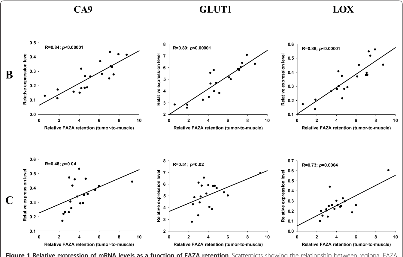 Figure 1 Relative expression of mRNA levels as a function of FAZA retention. Scatterplots showing the relationship between regional FAZA retention (relative to muscle) and expression levels of the three HIF-1a regulated genes CA9, GLUT1 and LOX in 2 representative fragmented FaDudd xenograft tumors. Each dot represents matching values for a single tumor fragment.