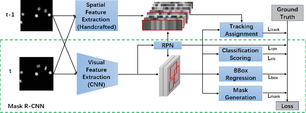 Figure 1 for CellTrack R-CNN: A Novel End-To-End Deep Neural Network for Cell Segmentation and Tracking in Microscopy Images