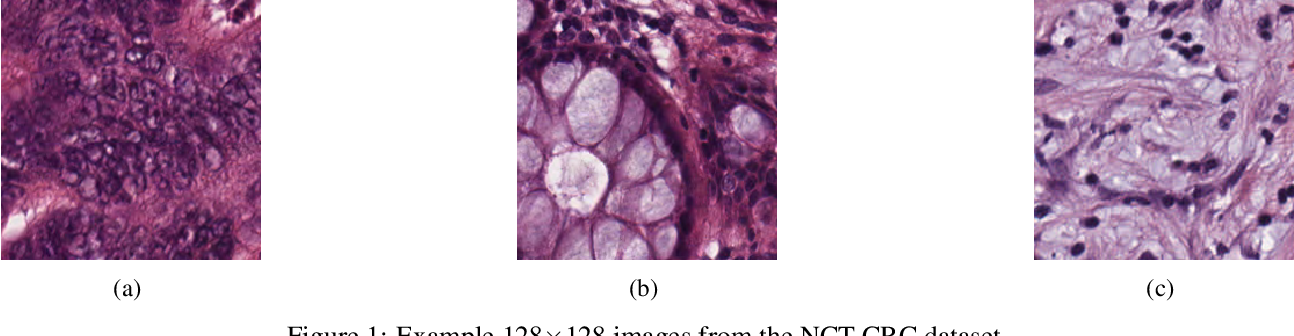 Figure 1 for Multi-Channel Auto-Encoders and a Novel Dataset for Learning Domain Invariant Representations of Histopathology Images