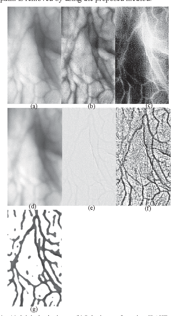 Figure 2 for A single scale retinex based method for palm vein extraction