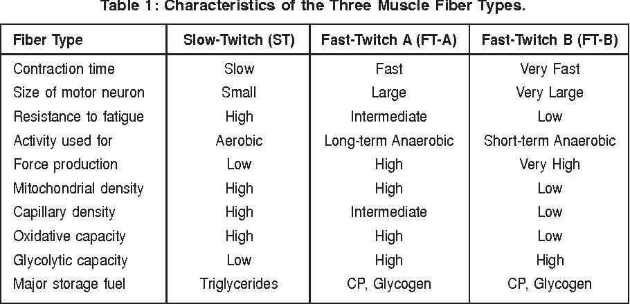Αποτέλεσμα εικόνας για muscle fibers
