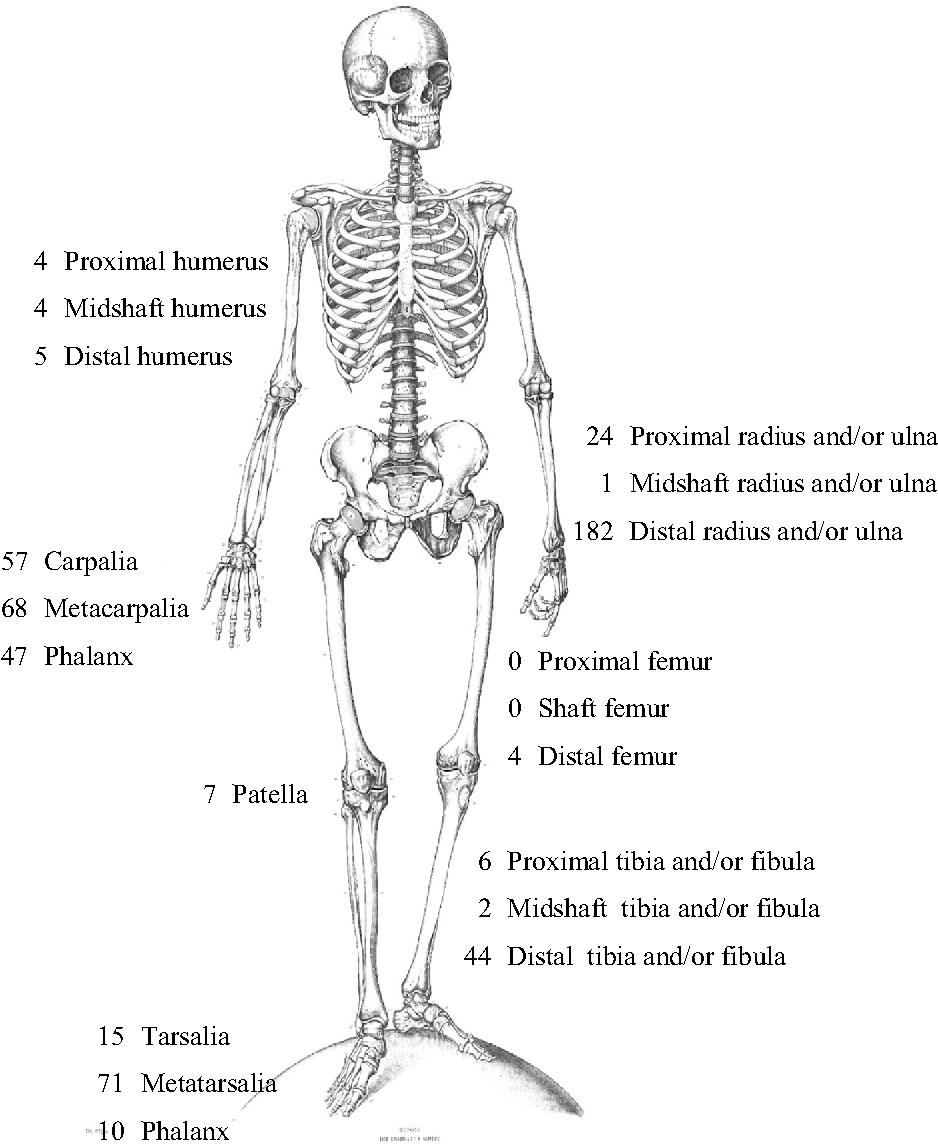 Wunderbar Was Bedeutet Proximal In Der Anatomie Bilder - Menschliche ...