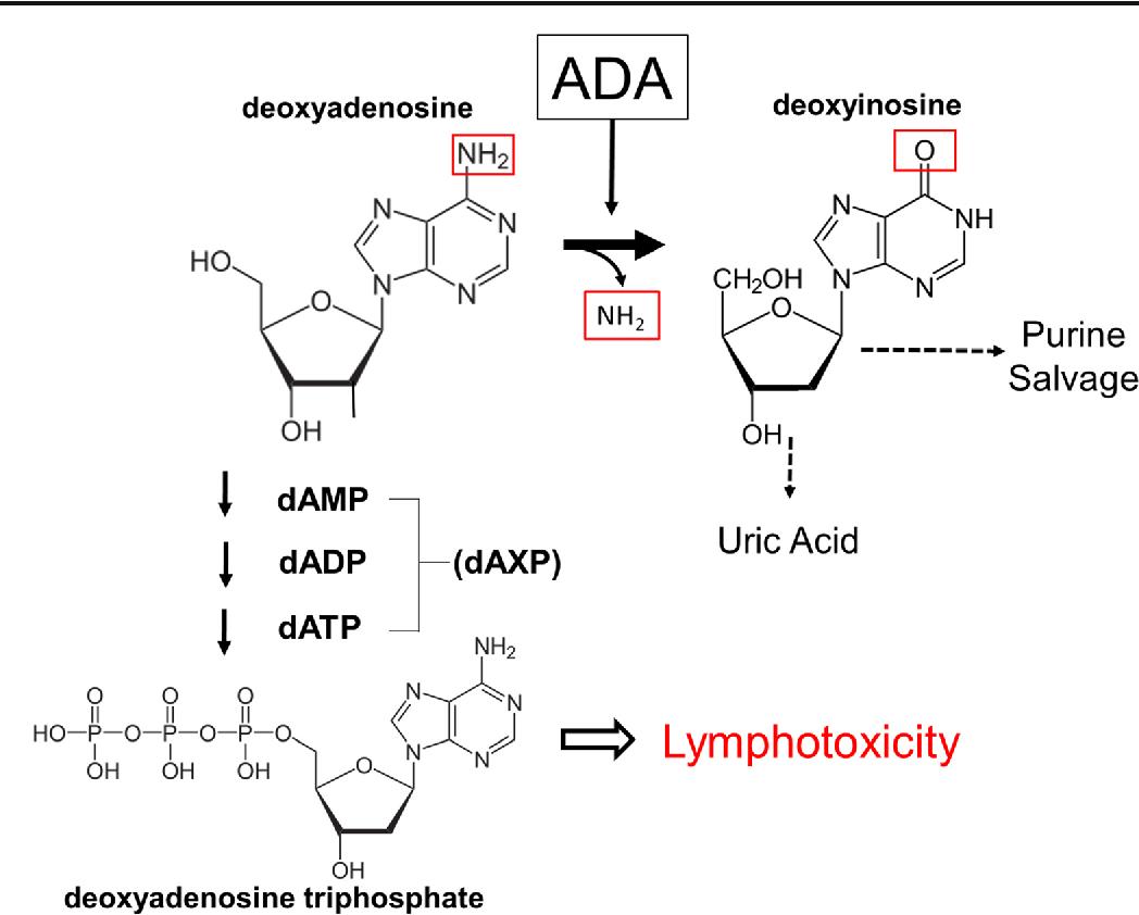 figure 1 from adenosine deaminase ada deficient severe combined