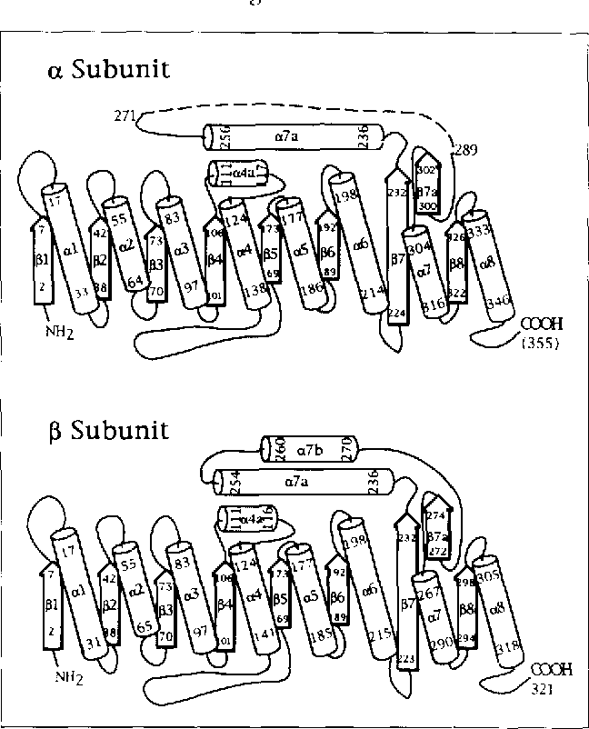 Figure 3 From Structure Of Bacterial Luciferase