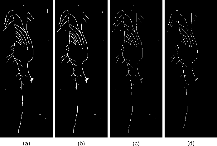 Figure 4 for Arabidopsis roots segmentation based on morphological operations and CRFs