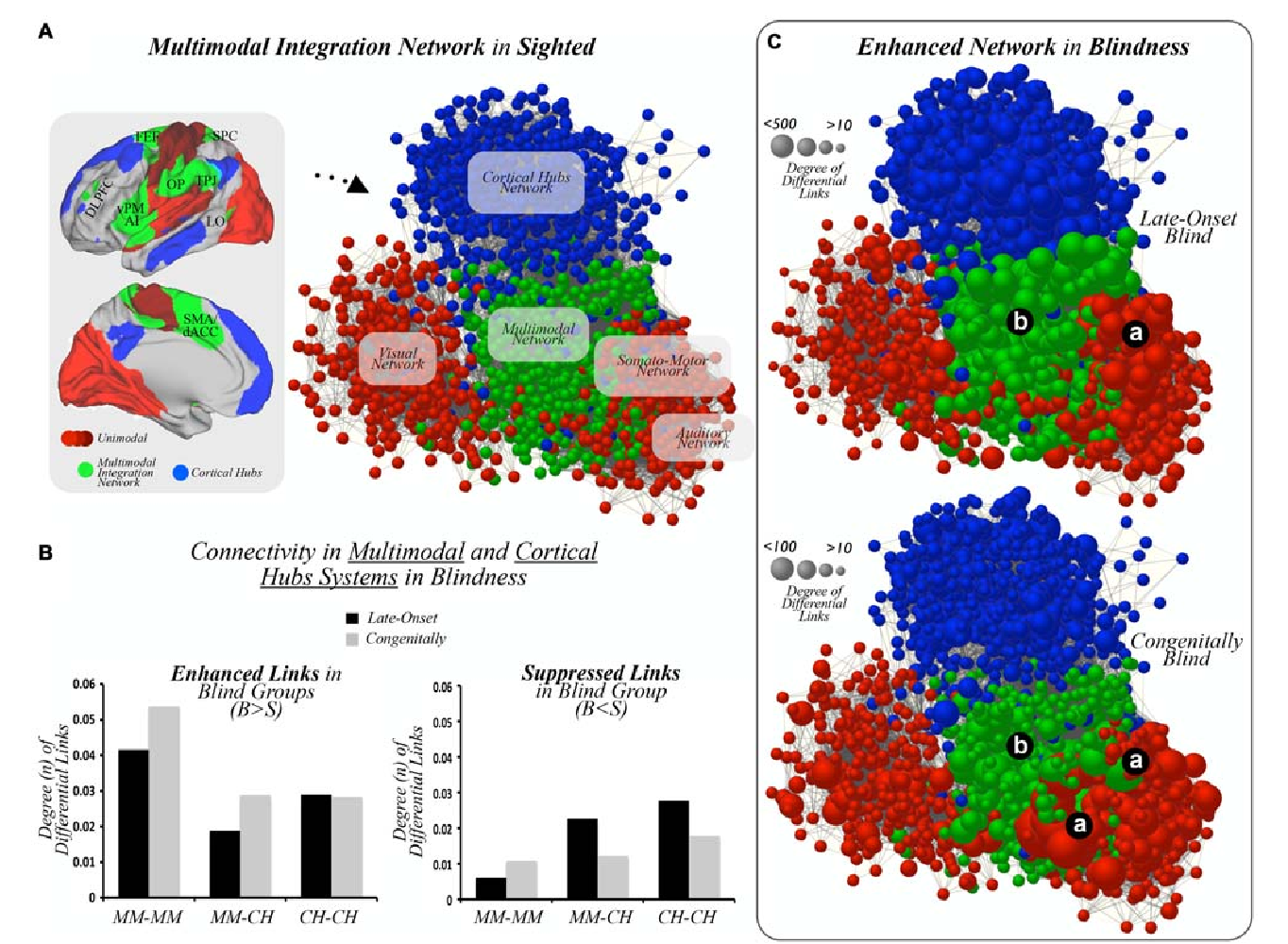 FIGURE 2   Multimodal integration networks. (A) Unimodal sensory cortices (different shades of red), multimodal integration cortices (green), and cortical hubs (blue) are displayed on template brains, as well as on a graph layout illustrating connectivity patterns across systems in the sighted controls. DLPFC = dorsolateral prefrontal cortex, FEF = frontal eye field, SPC = superior parietal cortex, vPM = ventral premotor, AI = anterior insula, OP = operculum parietale, TPJ = temporo-parietal junction, LO = lateral occipital, dACC = dorsal anterior cingulate cortex. (B) Bar graphs show statistically significant increased or enhanced (left) and decreased or suppressed (right) interconnectivity between multimodal regions and cortical hubs in blind subjects compared to MCs. Results in bar graphs show the total amount of FDR-corrected functional connections that differ between studied groups, and, thus, standard deviation or error bars do not apply here. MM = multimodal, CH = cortical hubs, B = Blind, S = Sighted. (C) Graph based layouts of the three hierarchical networks in LB and CB subjects [size of nodes = degree of differential links (DDL)]. Due to normalization and scale proportions, both segments of panel (C) were scaled to aid visualization. (a) unimodal cortices; (b) multimodal integration cortices.