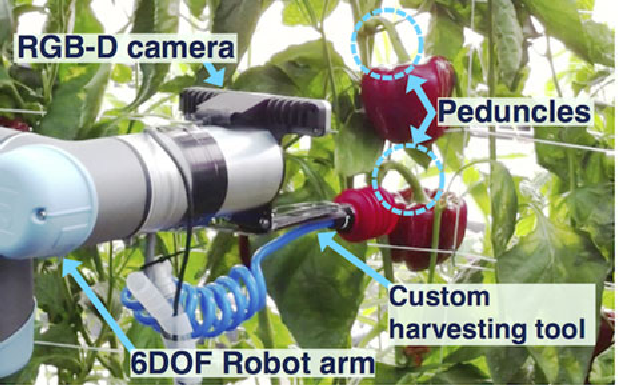 Figure 1 for Peduncle Detection of Sweet Pepper for Autonomous Crop Harvesting - Combined Colour and 3D Information