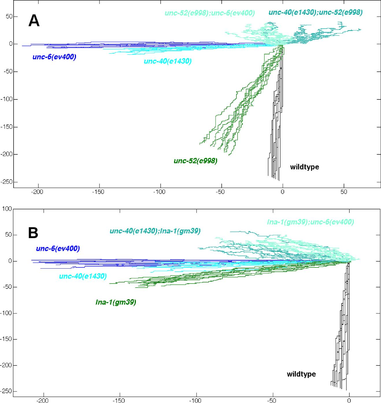 figure 8 from extracellular matrix regulates unc 6 netrin axon rh semanticscholar org