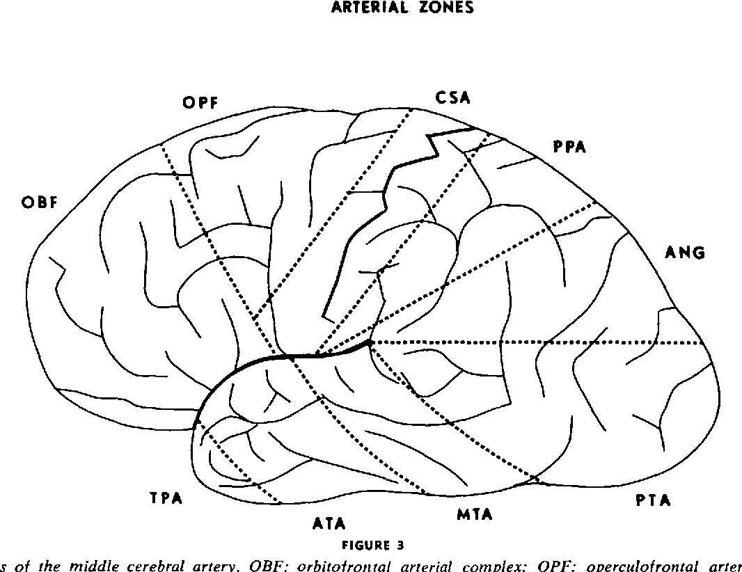 Anatomy of the middle cerebral artery: the temporal branches ...