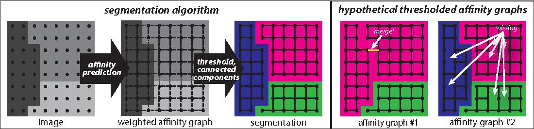 Figure 1 for Maximin affinity learning of image segmentation