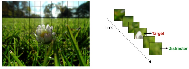 Figure 3 for Object Segmentation in Images using EEG Signals