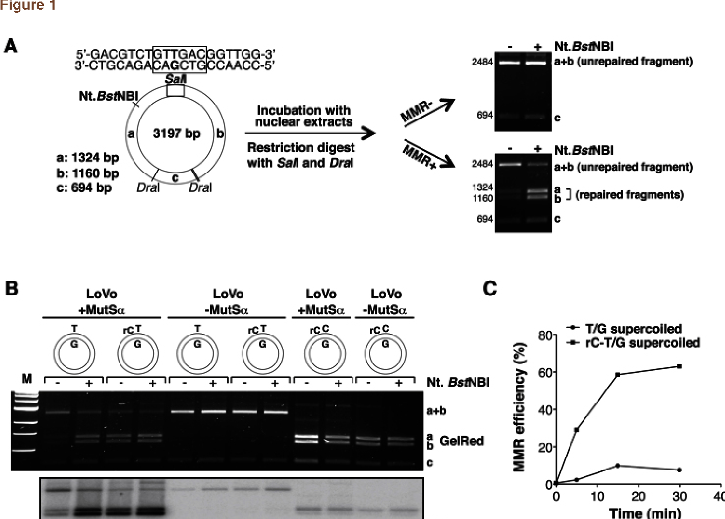 ribonucleotides misincorporated into dna act as strand rh semanticscholar org Series Circuit Diagram Electronic Circuit Diagrams