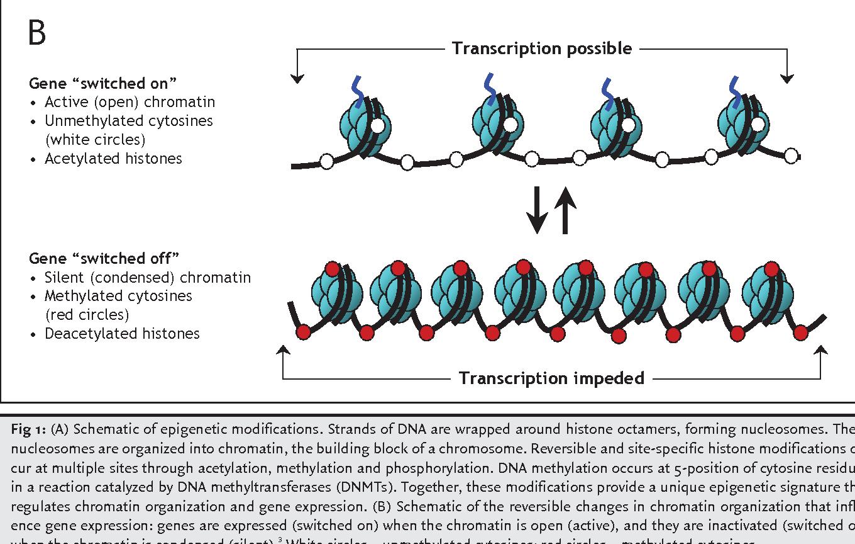 Basic principles of epigenetics dna methylation and histone figure 1 malvernweather Choice Image