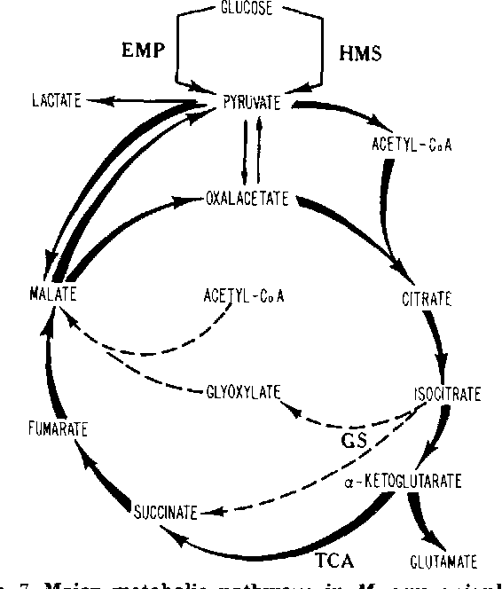 Figure 7 From 13c Nuclear Magnetic Resonance Studies Of The
