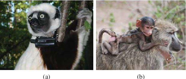 Figure 1 for Face Recognition: Primates in the Wild