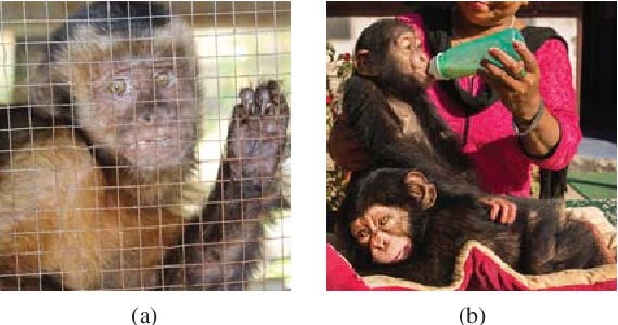 Figure 3 for Face Recognition: Primates in the Wild