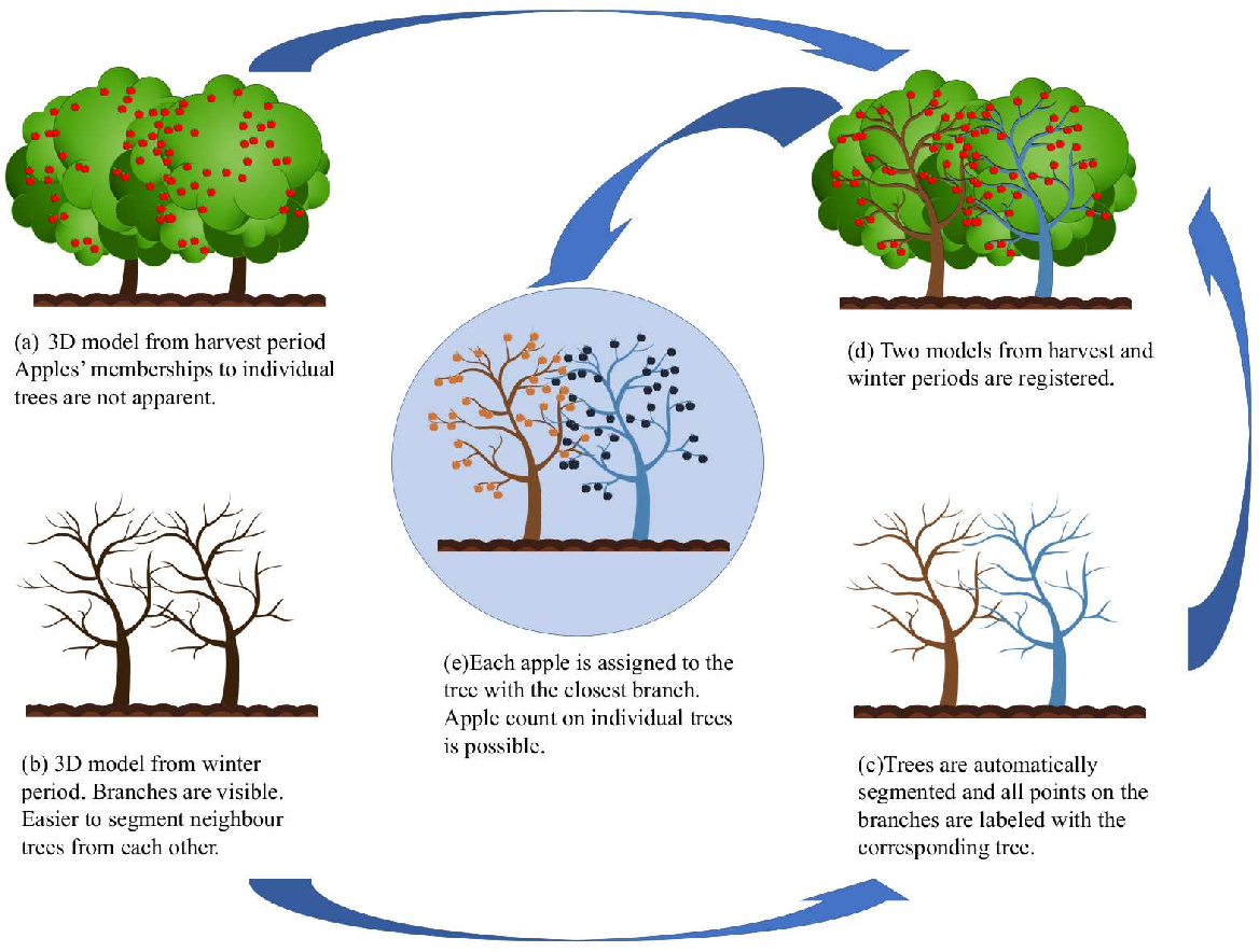 Figure 1 for Assigning Apples to Individual Trees in Dense Orchards using 3D Color Point Clouds