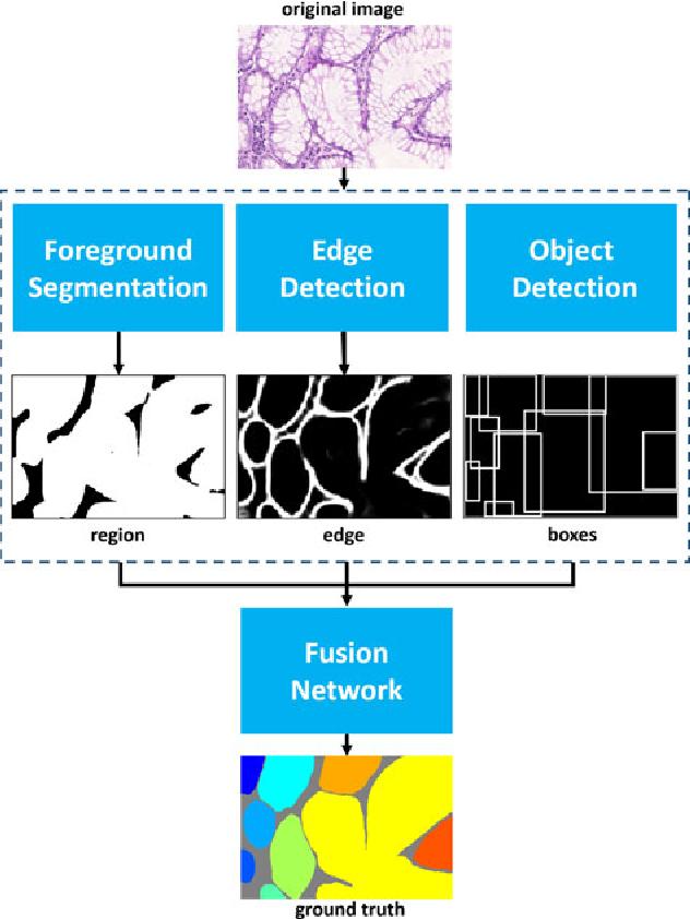 Figure 2 for Gland Instance Segmentation Using Deep Multichannel Neural Networks