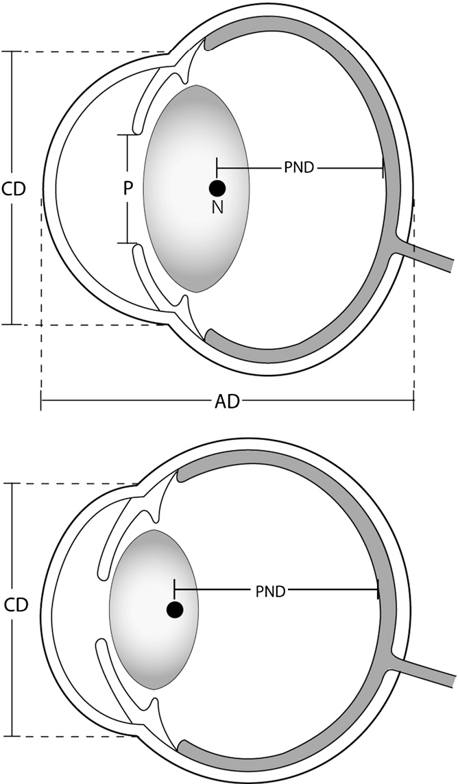 Figure 1 From Evolution Of Eye Size And Shape In Primates
